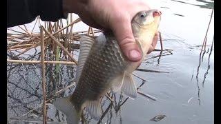 О рыбалке всерьез на 11 канале