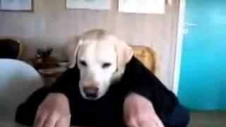 Виждали ли сте ТАКОВА куче до сега ?