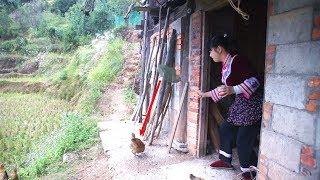 农村姑娘出奇招,抓鸡的方法太搞笑了,你说这样能抓到吗