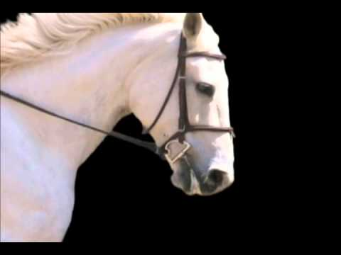 Mikmar D Ring Snaffle with Loops