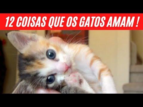 12 COISAS QUE OS GATOS AMAM  GATO | Gatos Persas -  Gatos Siameses