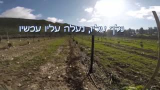ענבי טלי סיום עונת 2014 - יוצא אל האור