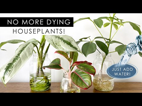 These Beautiful Indoor Plants Don't Need Soil to Grow