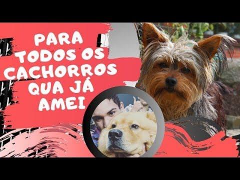 PARA TODOS CACHORROS QUE JÁ AMEI #2