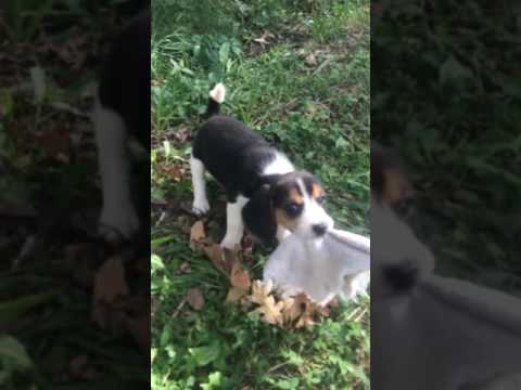 Video of max playing.
