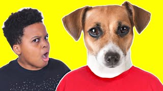 TRY NOT TO LAUGH Funny Dog Compilation - Onyx Family