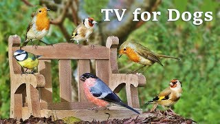 Dog Watch TV Spectacular - Videos for Dogs to Watch Garden Birds ✅