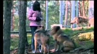 Смотреть онлайн Охота на волка. Психология и повадки зверя