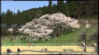 (動画)飛騨高山の紹介 春