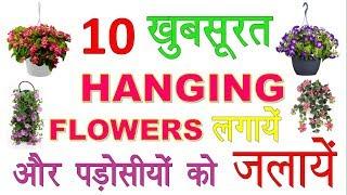 10 खूबसूरत Hanging Flowers लगायें और पड़ोसियों को जलाये    Grow Hanging Flowers