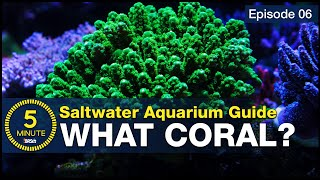 10 best beginner corals. You don't have to be rich to stock a reef tank
