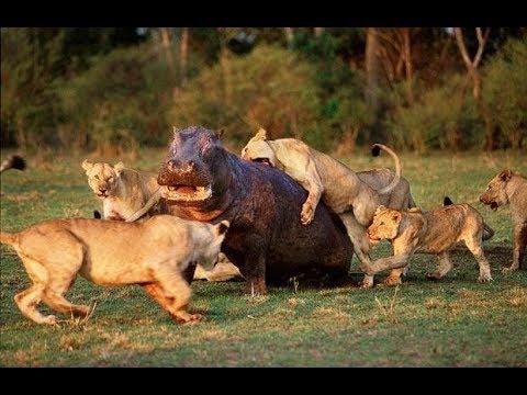 National Geographic Documentary - Fighting to Survive Wild Nature - Wildlife Animal