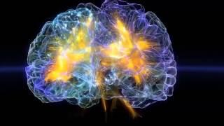 脳を巡る旅
