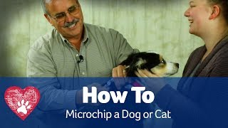 How To Microchip a Dog