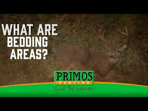What are Deer Bedding Areas? video thumbnail