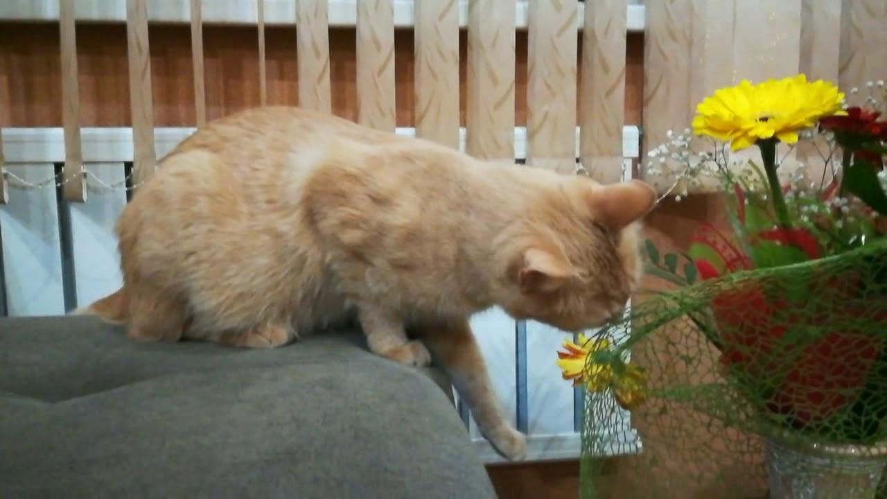 Кот расправился с букетом