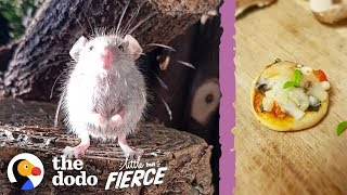 Microscopic Baby Mouse Grows Up And Eats Tiny Pizzas   The Dodo Little But Fierce