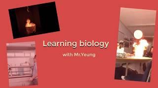 Biology - Punnett Squares Lesson 1 - Relating Meiosis to Punnett Squares