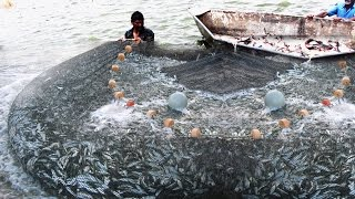 Fisherman Attack on Fishes Ever Caught On Camera