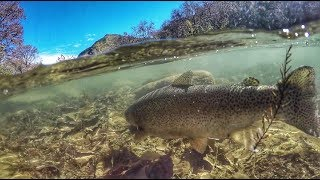 Kayak Fishing for Rainbow Trout on the Guadalupe River in New Braunfels, Tx (Part 1)
