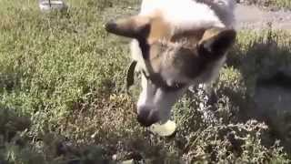 Funny Animals-laughed A Lot With The Actions Of Animal Humor