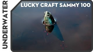 Воблеры lucky craft sammy 128