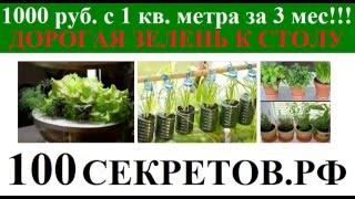 Как вырастить зелень и хорошо заработать Растим зелень в темноте!