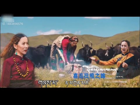 Tibetan song 2021 རི་བོ་ཧི་མ་ལ་ཡ་ by Damding Tso