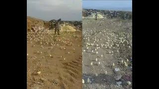 Из выброшенных яиц вылупились тысячи цыплят.