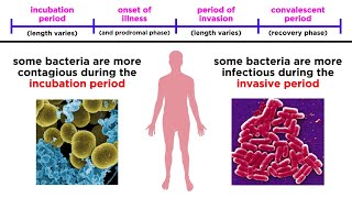 Bacterial Infections in Humans