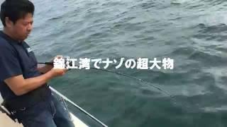 錦江湾で謎の超大物をvalgoで釣り上げる動画