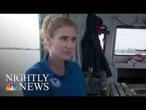 Fishing For Energy: Ocean Debris Turned Into Fuel In Florida | NBC Nightly News