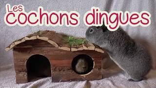 Cochons Dingues - Bande annonce - COCHONS DINGUES (LES)