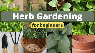Planting an Herb Garden for Beginners