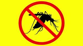такой ситуации чем спасаться от комаров дома управления