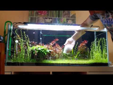 Como limpiar los cristales acuario con perlon eliminar punto verde