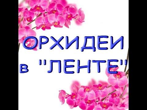 """ОРХИДЕИ в """"ЛЕНТЕ"""",ТЦ """"Эль Рио"""",Самара,06.01.21."""
