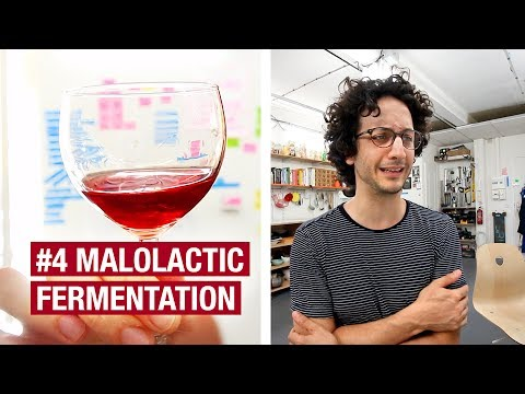 4. I Wish I Could Go Back In Time… The Malolactic Fermentation.