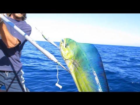I fishings hanno adottato la legge su pagato