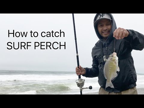 Tips and Techniques for fishing Surf Perch | Catch and Cook
