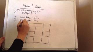 Monohybrid And Dihybrid Crosses