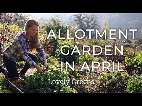 April Allotment Garden Tour