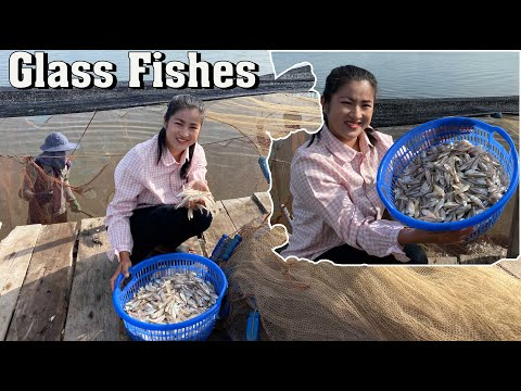 Glass Ocean Fishes Cooking / Crispy Glass Fishes Recipe / Prepare By Countryside Life TV