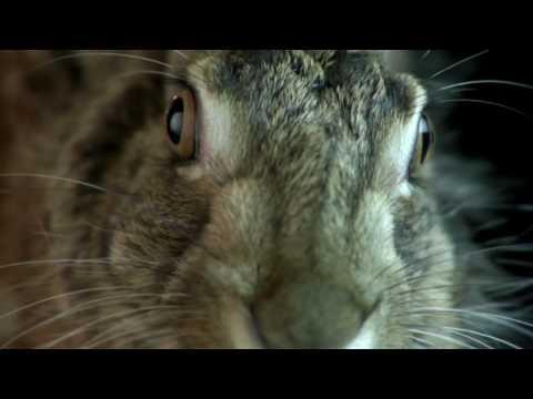 Video of Síntomas Meningitis