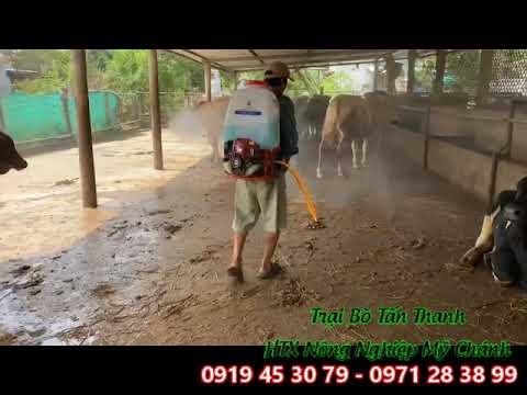 TRẠI BÒ TẤN THANH - TRẠI BÒ BẾN TRE - 0971 28 38 99