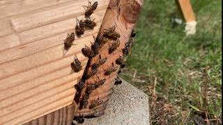 Pros and Cons of helping bees with temperature and humidity control within the hive
