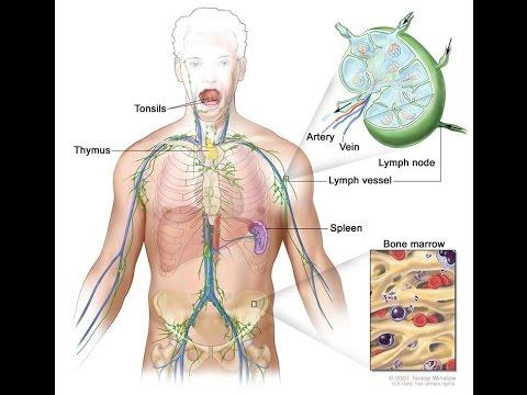Giardiasis viszketése a végbélnyílásban