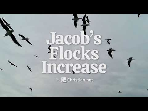 Genesis 30:25 – 43: Jacob's Flocks | Bible Story (2020)