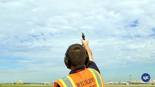 Jet Fueled Jobs | Keeping Planes Safe From Wildlife