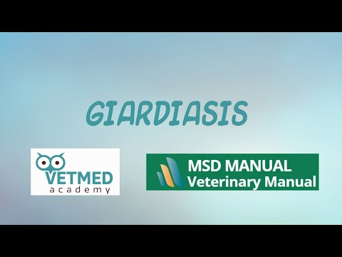Giardia in humans treatment